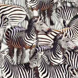 Zebra Animal Print Fabric - 4 way stretch Elastane Spandex Lycra Stretch Knit Jersey - 160cm Wide - Black & White Zebras