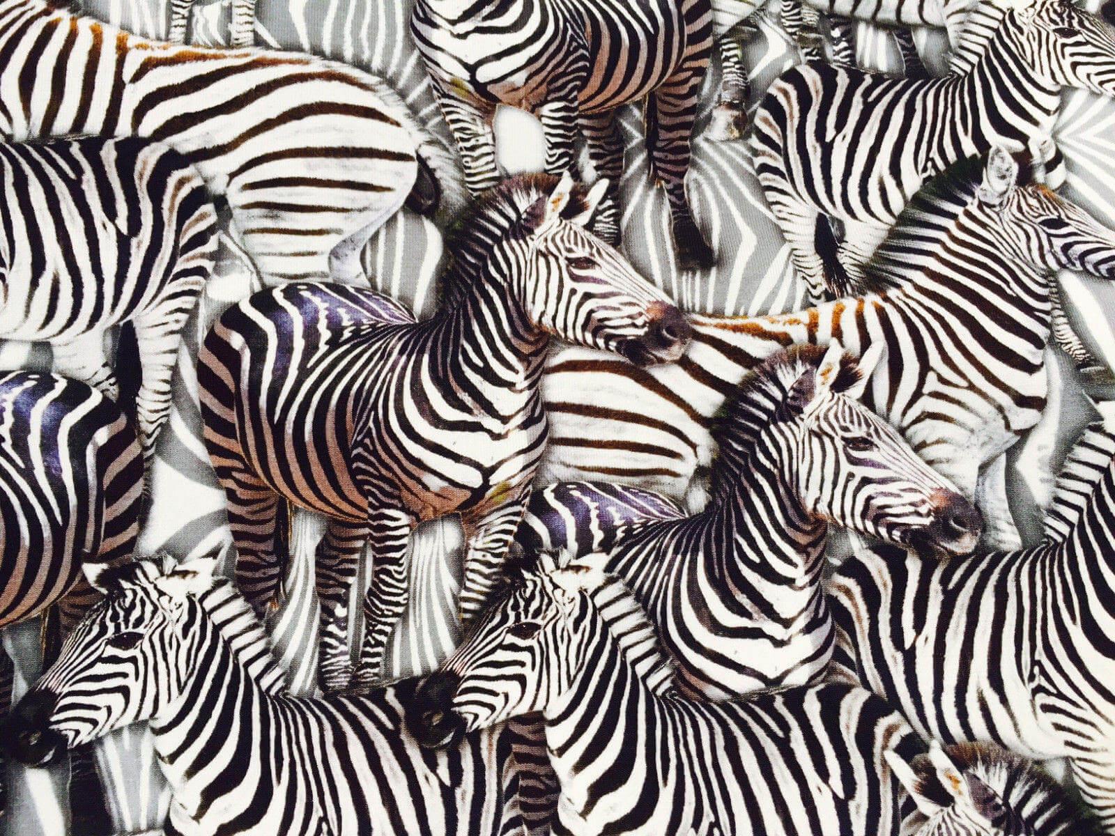 zebra-animal-print-fabric-4-way-stretch-elastane-spandex-lycra-stretch-knit-jersey-160cm-wide-black-white-zebras-5e248c501.jpg